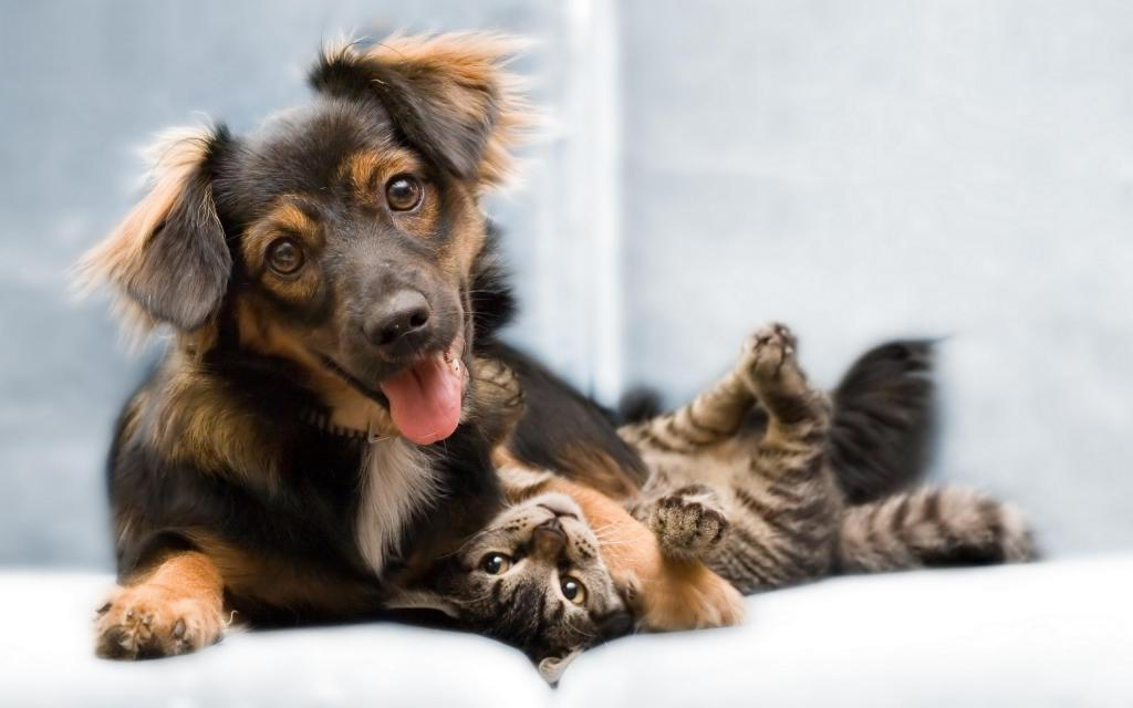 Hey Calgary Landlords, Lets Help out Some Pets! - Rentza Blog
