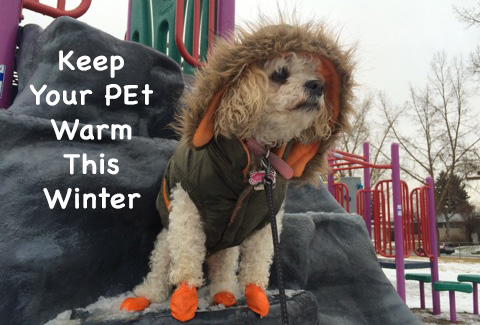 pet friendly winter tips