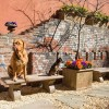 Pet Friendly Apartment Rentals