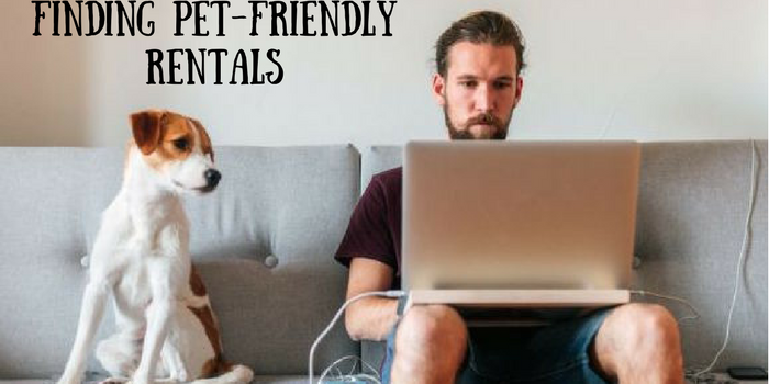Finding Pet-friendly Rentals in Calgary