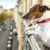 Searching for Dog Friendly Apartments